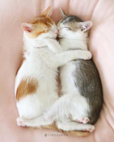 猫 添い寝 寝顔 ベッド ぬいぐるみ