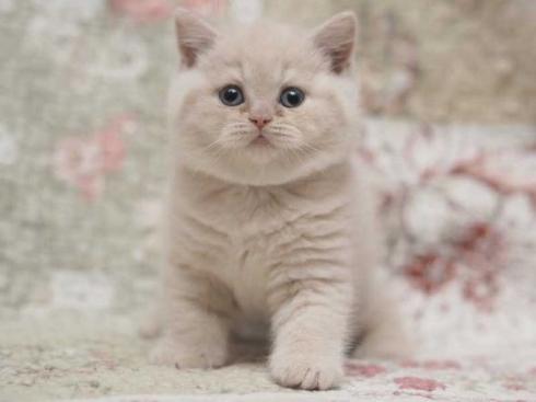 猫 モコモコ ぬいぐるみ