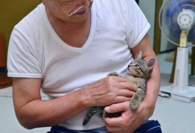 排水溝 子猫 救出 ペットボトル