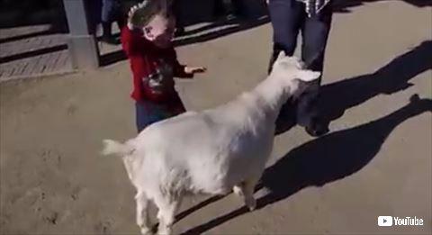 ヤギ オナラ