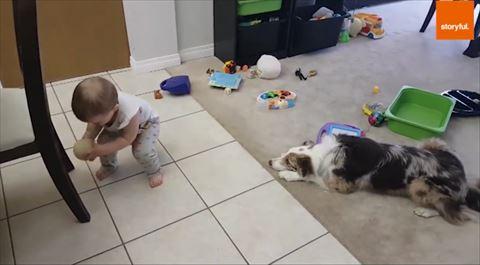 犬 ボール 赤ちゃん