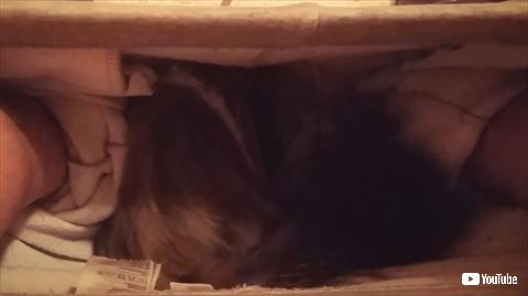 猫 トイレ ズボン