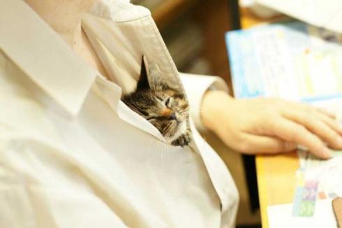 胸元 子猫 お父さん