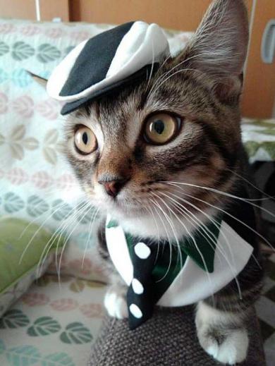 猫 スタイ おしゃれ タイバニ