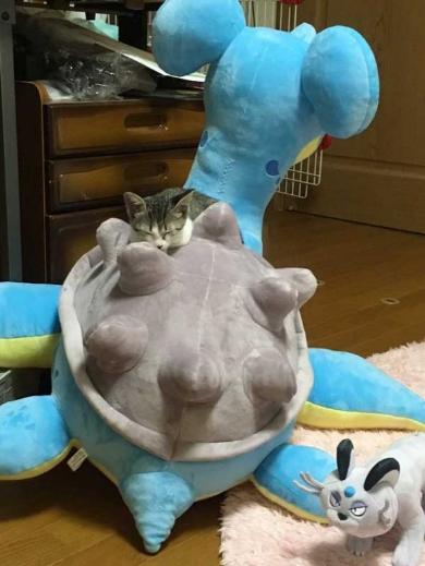 ラプラス 子猫 ぬいぐるみ