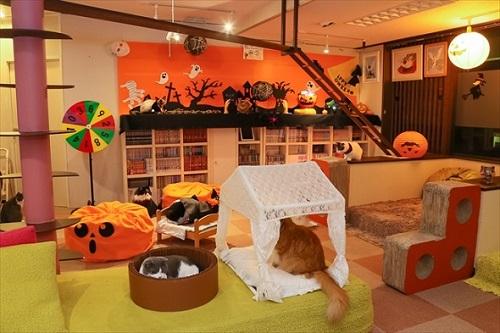 猫家大宮店