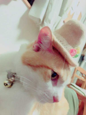 猫 ライフル 銃 コスプレ