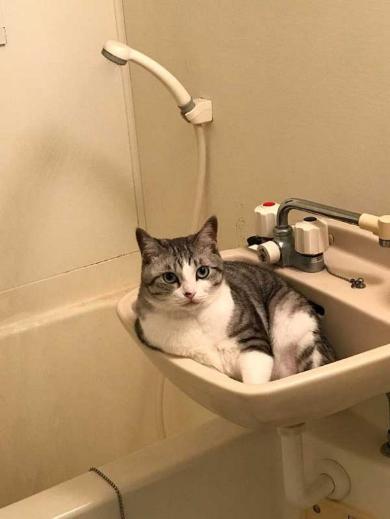 猫 体温 仮病 会社