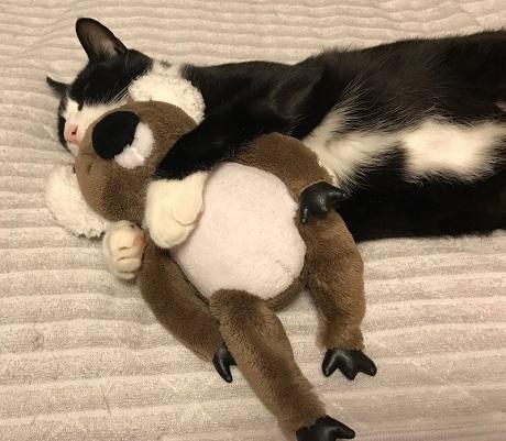 猫とハムスター