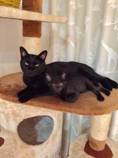 黒猫 階段 防御 倒す 3匹