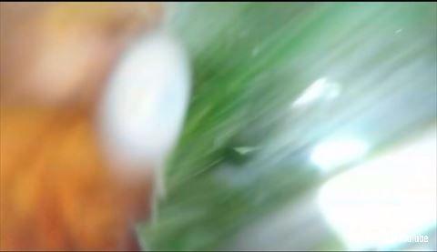 タコ GoPro