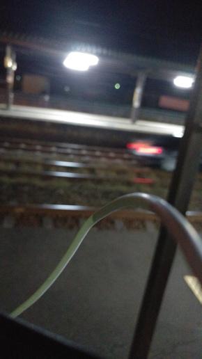 高齢者男性(83歳)の運転する乗用車が、JR北海道室蘭線の線路を侵入、走行