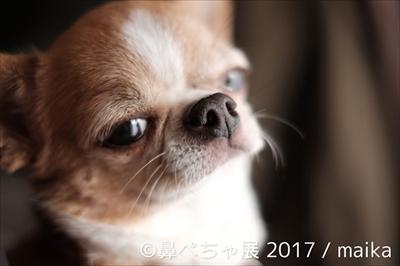鼻ぺちゃ展