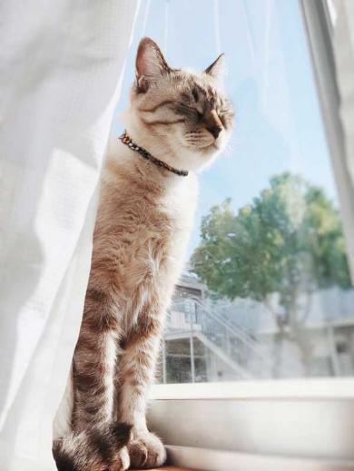 猫 愛情表現 ヘタ 怒られる