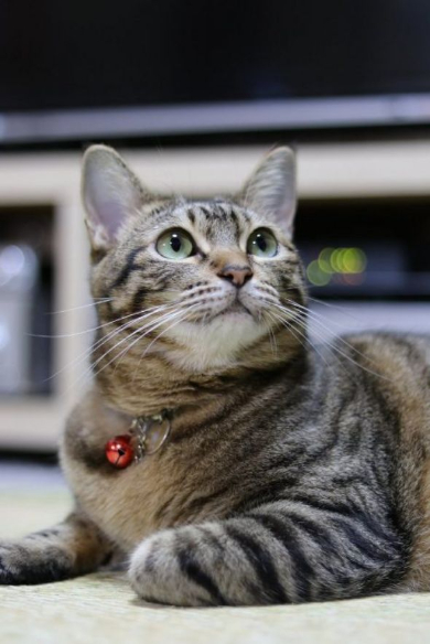 猫ビフォーアフター