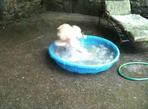 犬 水浴び
