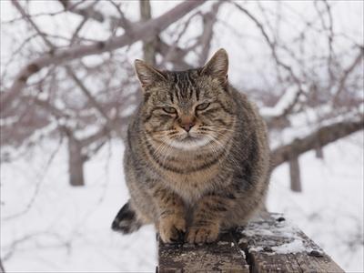 世界ネコ歩き