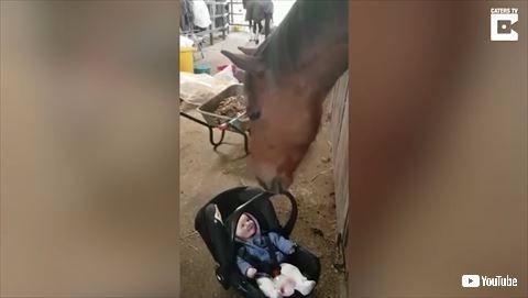馬 赤ちゃん