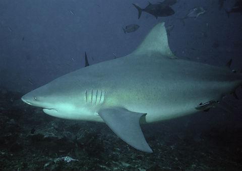 ワニ サメ