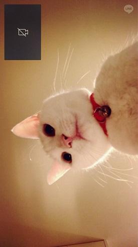 猫iPhone