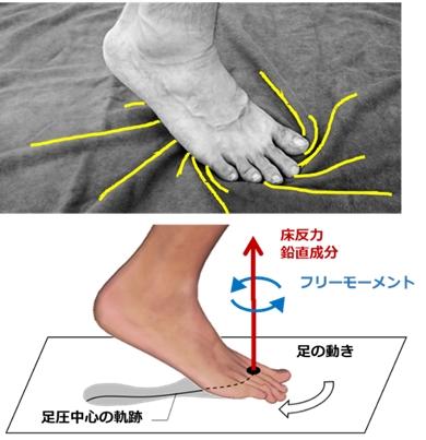 東京農工大学、股関節の柔らかさが足への負担を左右すると発見 予防・リハビリへの応用に期待
