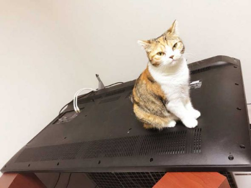 猫 テレビ 壊す