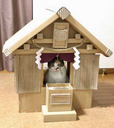 猫 御神体 ダンボール神社 母