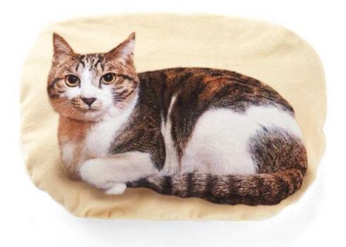 猫 ひざの上 ゴロゴロ クッションブランケット フェリシモ猫部
