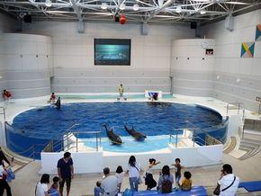 鹿児島 水族館 かごしま水族館 沈黙の海 何もない 水槽 怖い 考える