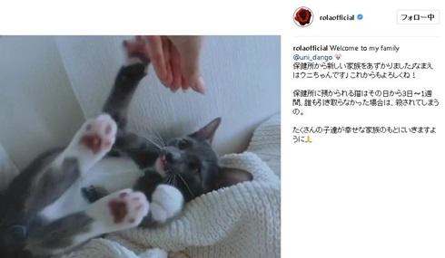 ローラ ウニちゃん 保護猫