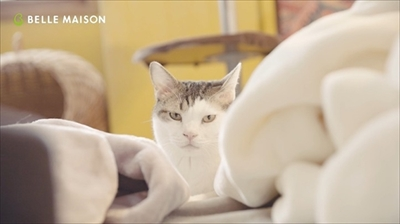 ベルメゾンとろけるようなシリーズ・猫動画