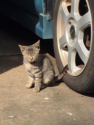 迷い猫 ウトウト 寝顔
