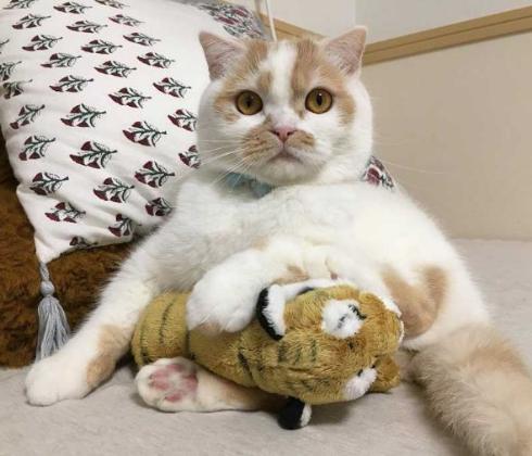 ホイップ 猫 馴染む ぬいぐるみ
