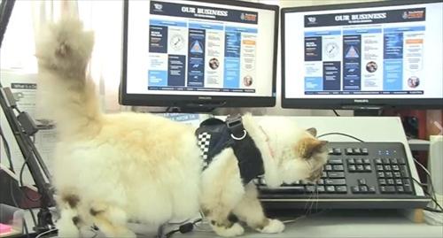 ニュージーランド警察猫