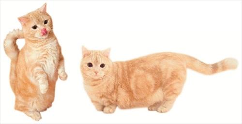 フェリシモ猫部・ぷーちゃんポーチ