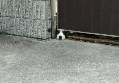 犬 おむすび 見える 擬態