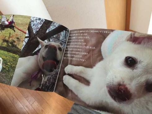 保護犬のわんこ プロジェクト 保護犬写真集 クラウドファンディング