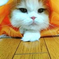 人魚姫ニャンコ
