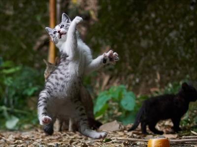 のら猫拳キッズ