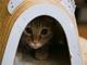 ただの猫カフェじゃない! 捨てネコと飼い主をマッチングする保護猫カフェ「SAVE CAT CAFE」に行ってきた