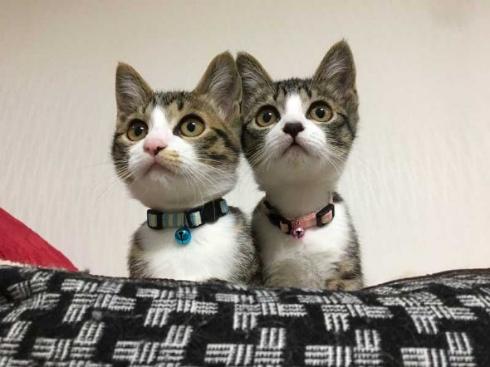 猫 成長 9カ月 2匹 仲良し