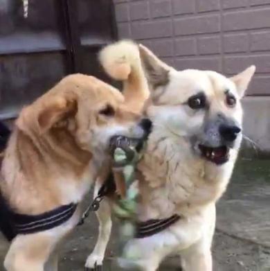 犬 表情 顔 おもちゃ ぶつけられた