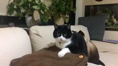 マッサージクッション 中に何か 猫 見た 表情 顔