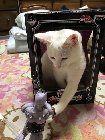 キラークイーン猫