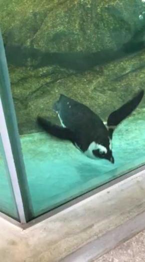 ペンギン デバッガー プロ 水槽