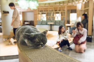猫カフェ・MOCHAラウンジ新宿店