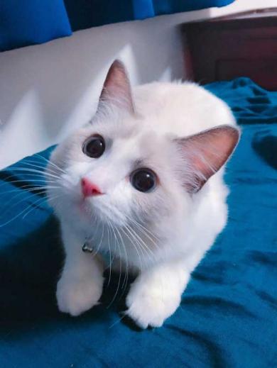 猫 エリザベスカラー カップ麺 快適