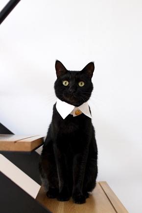 猫 ねこ ネコ 正装 首輪 付け襟 トラッド かわいい