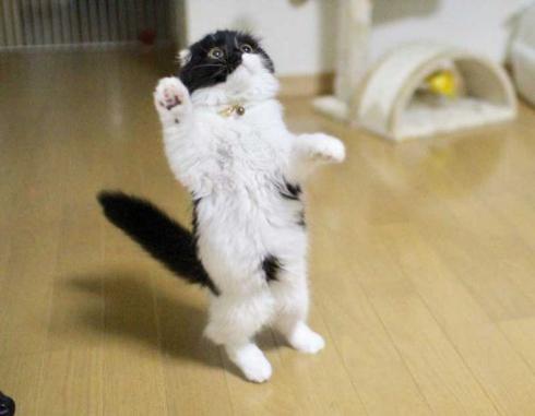 わけの分からない ポーズ 子猫 写真