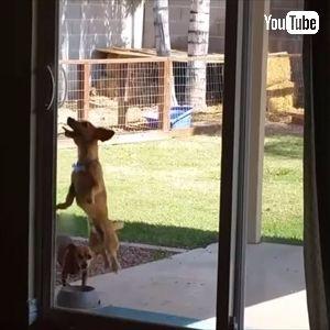 ドアを開けちゃうワンちゃん